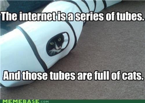 Cats internet lolcats Memes tubes - 5069150464