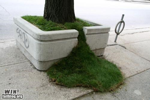 grass,mother nature ftw,planter,tree,urban