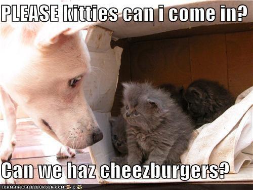 Cheezburger Image 5069185280