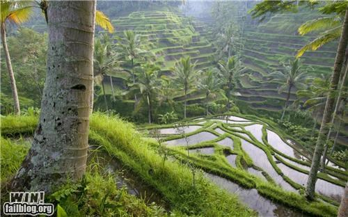 farming indonesia landscape photography plantation steppes - 5069254912
