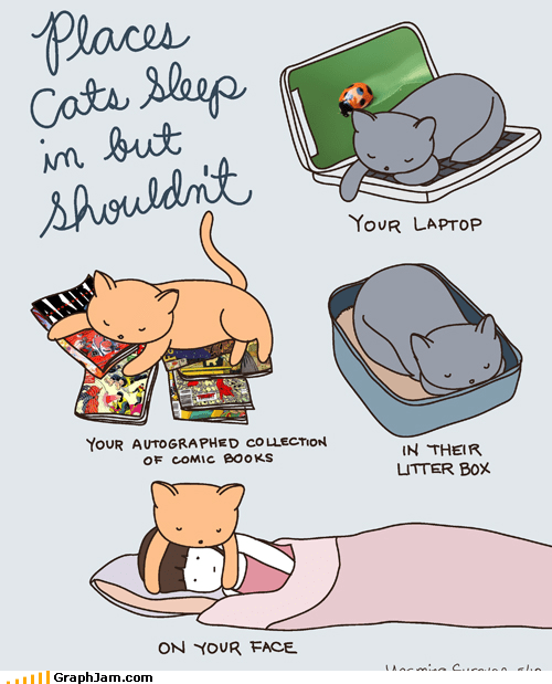 annoying,cat,Cats,cute,sleeping