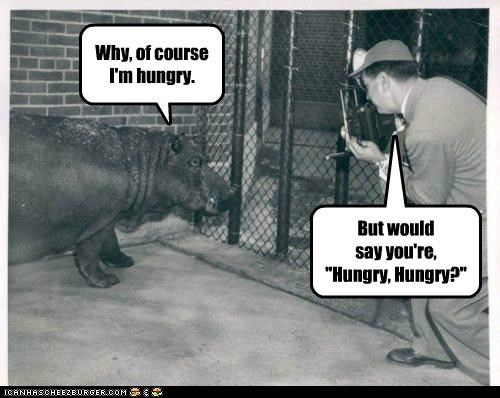 animal funny Photo - 5069607168