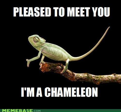 animals animemes chameleon handshake Memes - 5069703680