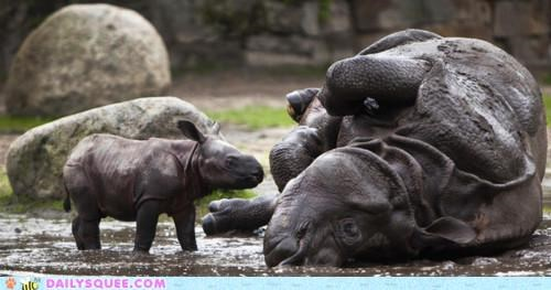 adele,baby,calf,deep,lolwut,mud,random,rhino,rhinoceros,rhinoceroses,rhinos,rolling,rolling in the deep,song,title