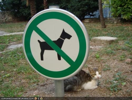 cyoot kitteh of teh day,no dogs allowed,rules,signs,smug