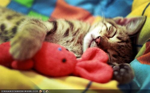 cyoot kitteh of teh day,nap,sleep,sleeping,sleeping in,toys