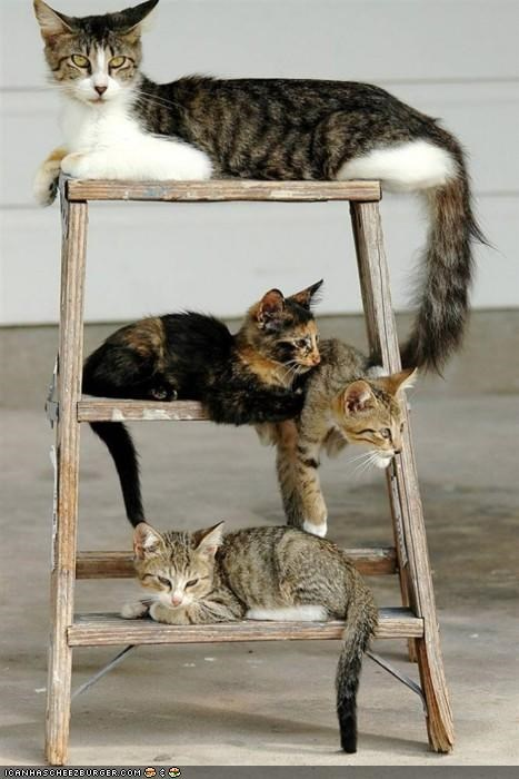 chillin cyoot kitteh of teh day family ladder lots of cats - 5070044928