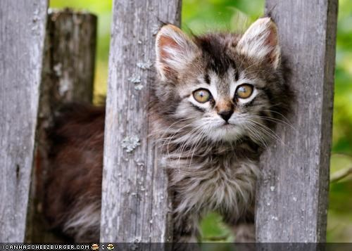 cyoot kitteh of teh day,fence,grass,nature,outside,wood