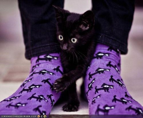 black cats cyoot kitteh of teh day designs feet socks - 5070054912