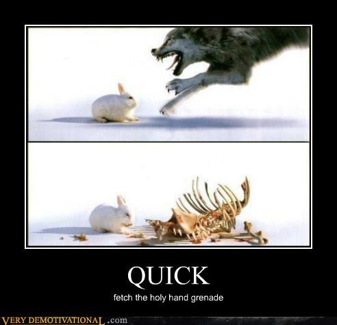 bunny hilarious monty python quick wtf - 5070262016