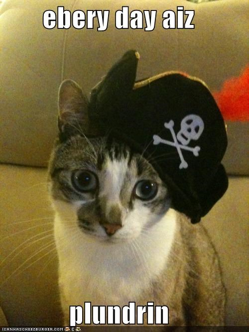 caption,captioned,cat,costume,dressed up,every-day-im-hustling,hat,lyric,parody,Pirate,rick ross,song
