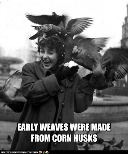 birds,corn,hair,historic lols,pigeons,prototype,weaves