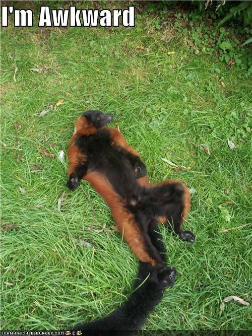 animals Awkward I Can Has Cheezburger lemurs weird - 5070498560