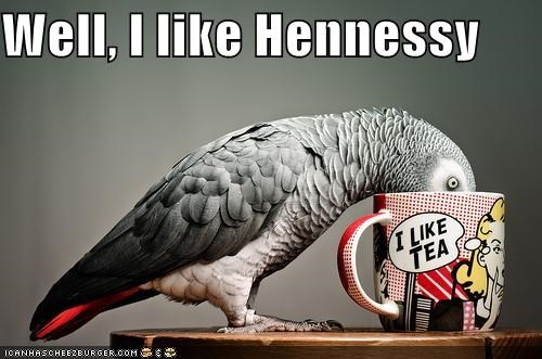 alcohol,birds,drinking,hennessy,I Can Has Cheezburger,mugs,parrots,tea