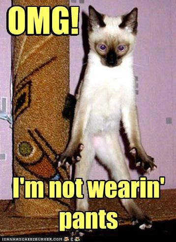 ashamed caption captioned cat epiphany not omg pants realization shocked siamese wearing - 5070928896