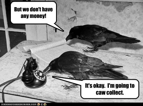 animal bird crow funny Photo - 5071996160
