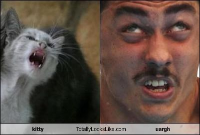 athlete,cat,diver,funny face,kitten,kitty,moustache,swimmer