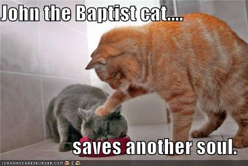 another baptist caption captioned cat Cats dish face john the baptist pushing saves soul tabby water