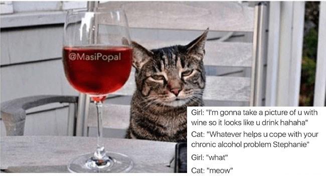funny captions on animal photos