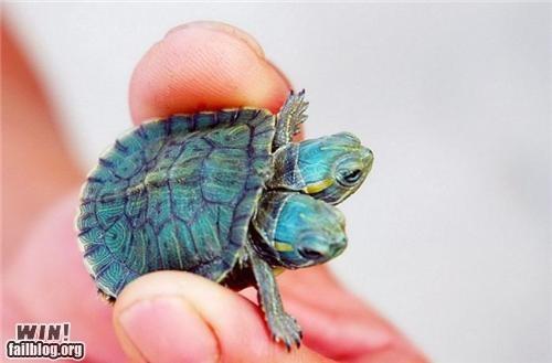 baby animals mutant nature TMNT turtle - 5073377280