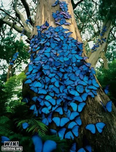 All the Colors of the Rainbow,butterflies,butterfly,nature,pretty colors,swarm,trees