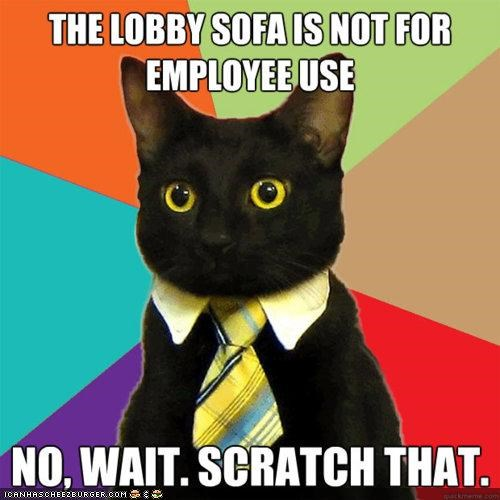 Business Cat,couches,destruction,furniture,memecats,Memes,scratching,sofas