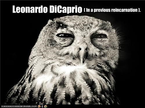 animals,expressions,I Can Has Cheezburger,Inception,leonardo dicaprio,look alikes,owls