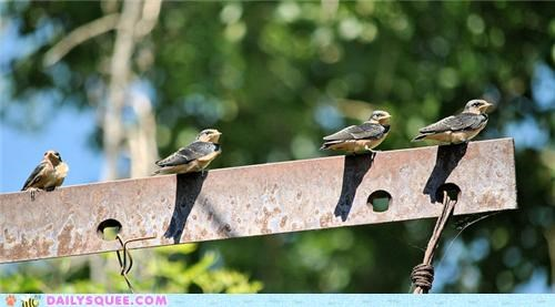 Babies baby fibonacci sequence squee spree swallow swallows - 5074110208