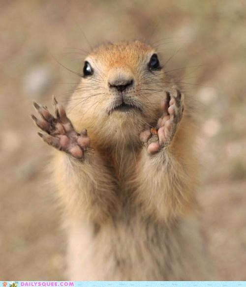 acting like animals band clap clap your hands say yeah gesture hands hipster lolwut name prairie dog say sentiment yeah - 5074207488