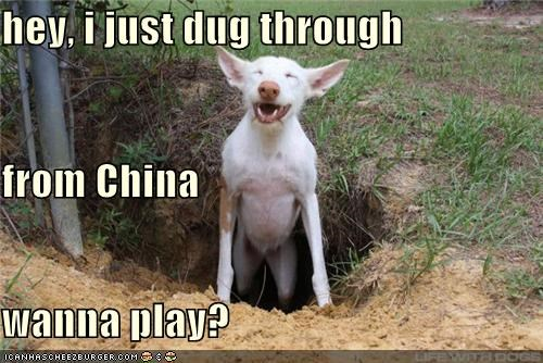 dig to china digger digging Dug dug from china happy happy dog new friends play smiling want to play whatbreed