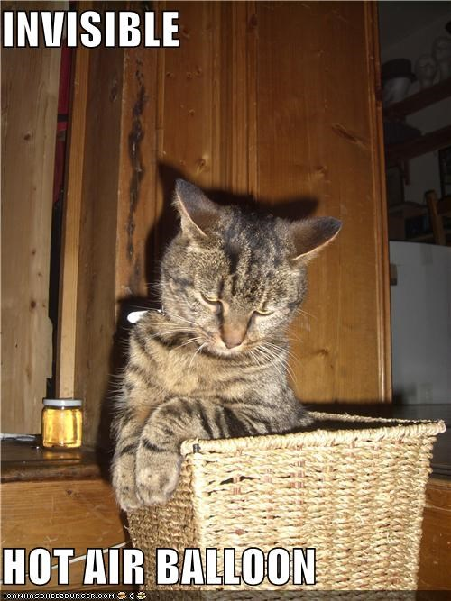 air balloon basket caption captioned cat hot invisible - 5075849216