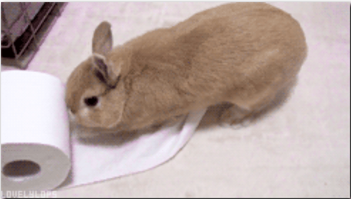 funny gifs of bunnies