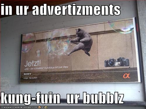 advertising billboards bubbles fighting kung fu lolcats - 507604224