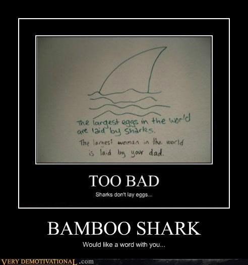 bamboo eggs hilarious shark wtf - 5076089088