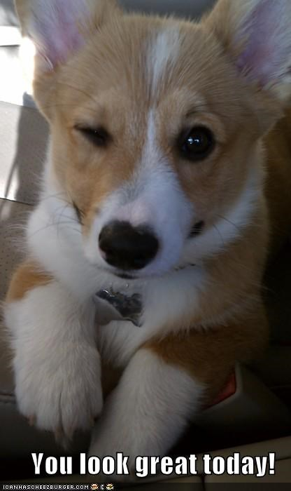 beautiful,corgi,flirt,handsome,how you doin,looking good,wink,winking,you look great today