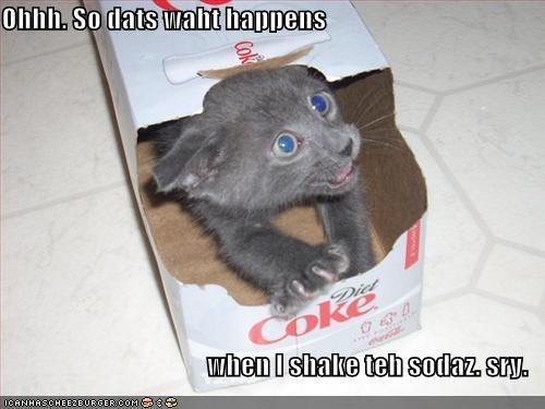 apologies boxes coke grey kitten lolcats lolkittehs pop soda sorry - 507644160