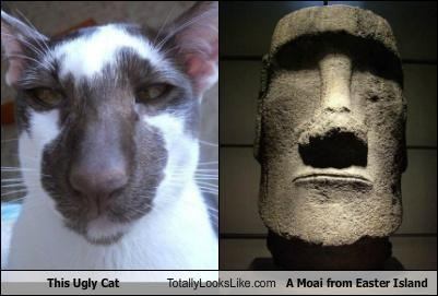 ancient animals cat easter island eastern island head moai - 5076580096