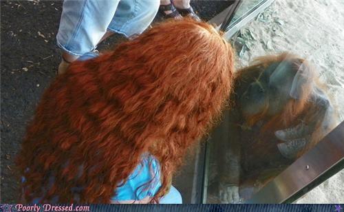 hair orangutan redhead - 5076604928