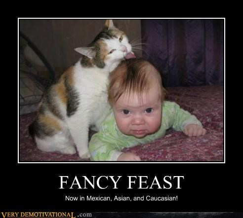 baby Cats fancy feast hilarious - 5076677632