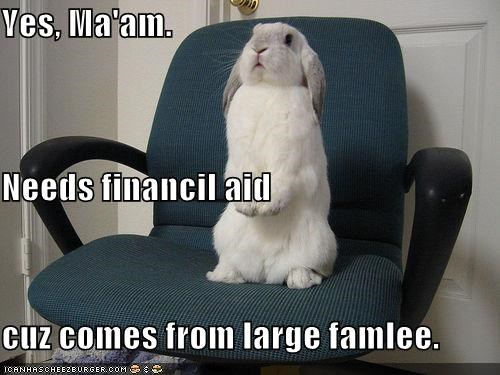 bunnies,chairs,college,financial aid,rabbits,school