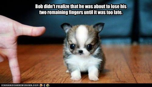 I Has A Hotdog - evil puppy - Funny Dog Pictures | Dog Memes | Puppy  Pictures | Pictures of dogs - Dog Pictures - Funny pictures of dogs - Dog  Memes - Puppy pictures - doge - Cheezburger