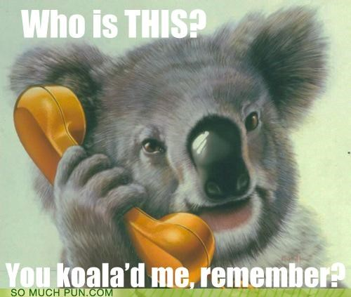 call,calling,koala,literalism,lolwut,phone,similar sounding,stretch,talking