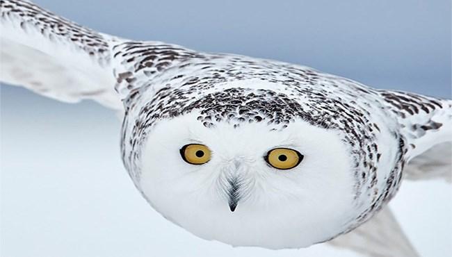 Awards art birds photos contest photographer - 5077509