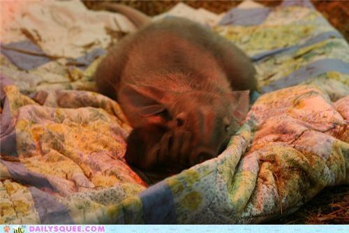 aardvark aardvarks aardwolf aardwolves Babies baby contest poll squee spree - 5077994496