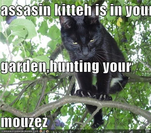 assasin kitteh is in your garden,hunting your mouzez
