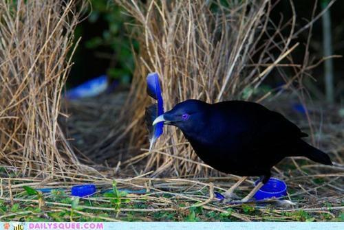 acting like animals adage bird blue borrowed frustrated new old scavenger hunt something trinkets - 5078082304