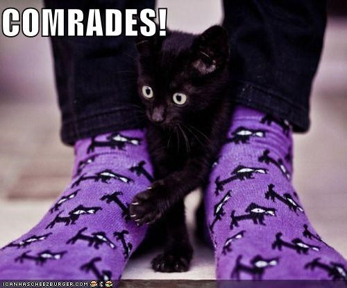 animals,Cats,comrades,confused,friends,I Can Has Cheezburger,look alikes,socks