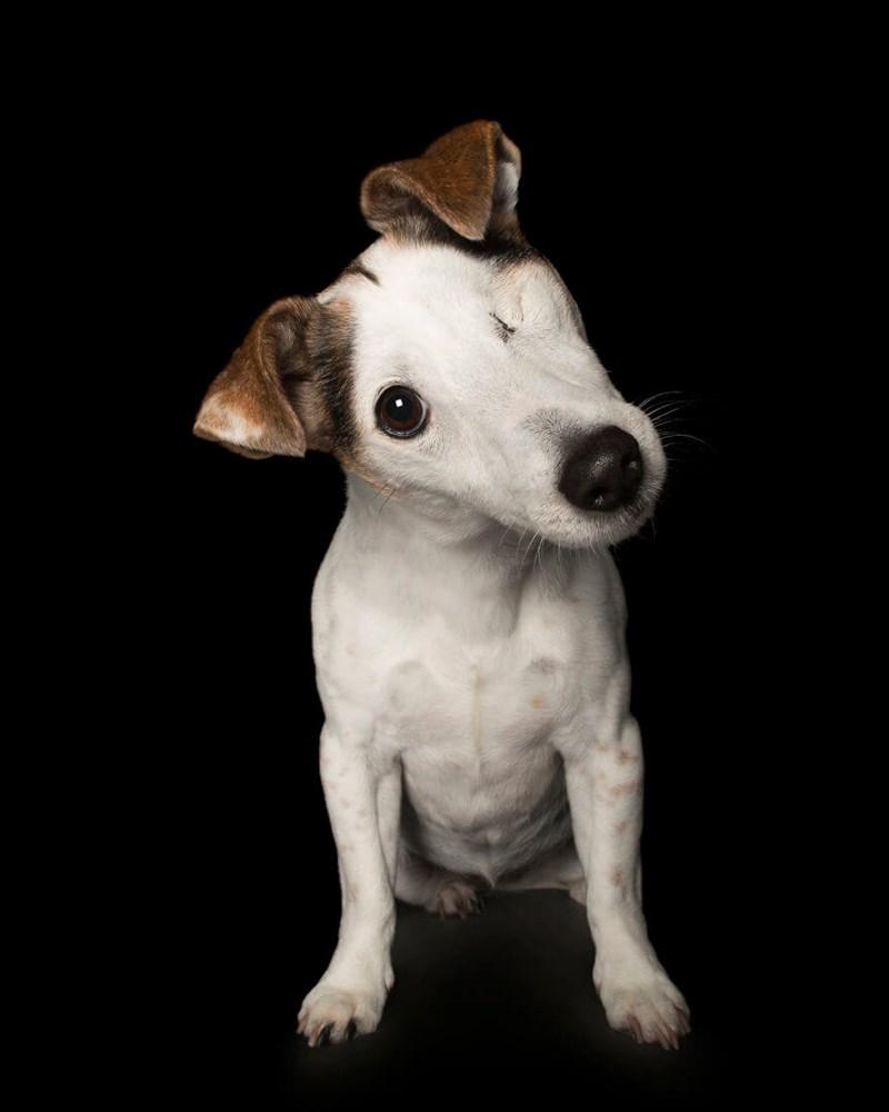 dogs disability photos book - 5078277