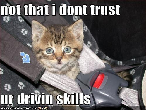 driving kitten lolcats lolkittehs seatbelt - 508041472