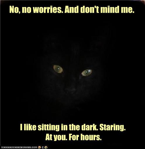 best of the week,caption,captioned,cat,dark,dont,Hall of Fame,hours,me,mind,no,sitting,Staring,worries,you